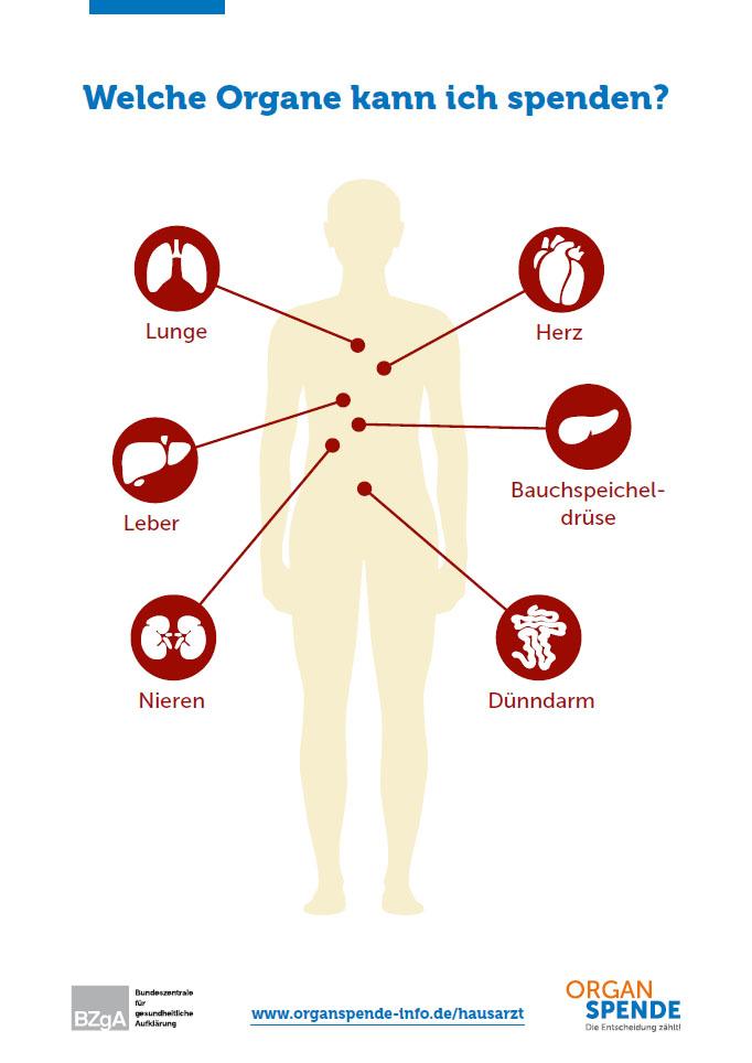 Übersicht Organe/Gewebe