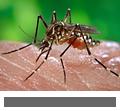 Eine Mücke sitzt auf einer Hand